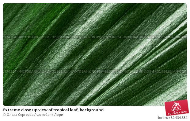 Купить «Extreme close up view of tropical leaf, background», фото № 32934834, снято 1 июля 2019 г. (c) Ольга Сергеева / Фотобанк Лори