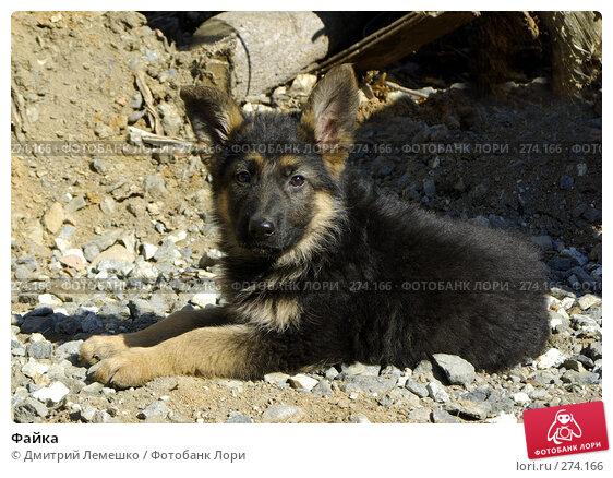 Файка, фото № 274166, снято 16 апреля 2008 г. (c) Дмитрий Лемешко / Фотобанк Лори