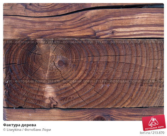 Фактура дерева, фото № 213870, снято 24 февраля 2008 г. (c) Liseykina / Фотобанк Лори