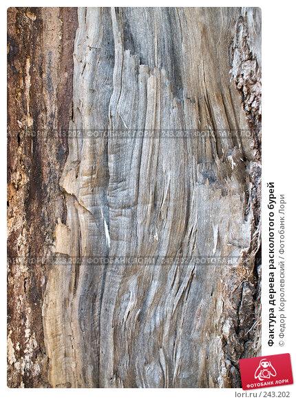 Фактура дерева расколотого бурей, фото № 243202, снято 4 апреля 2008 г. (c) Федор Королевский / Фотобанк Лори