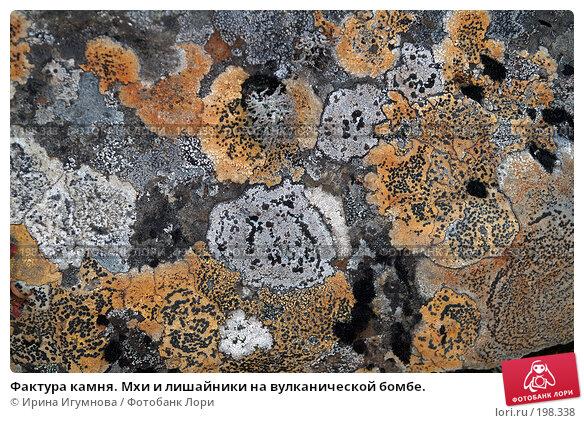 Фактура камня. Мхи и лишайники на вулканической бомбе., фото № 198338, снято 18 октября 2006 г. (c) Ирина Игумнова / Фотобанк Лори
