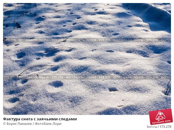 Фактура снега с заячьими следами, фото № 173278, снято 2 января 2008 г. (c) Борис Панасюк / Фотобанк Лори