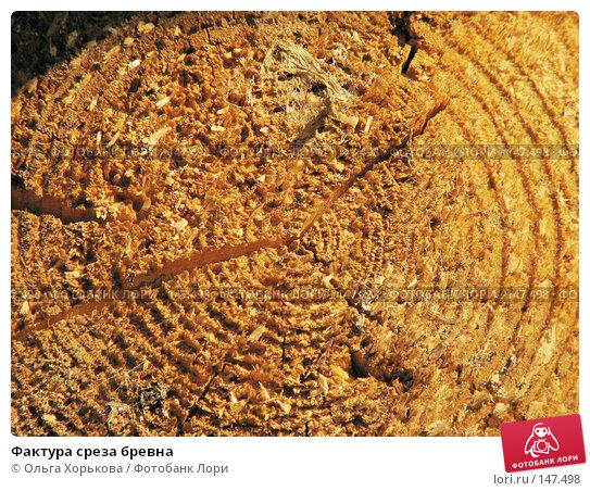 Фактура среза бревна, фото № 147498, снято 13 августа 2007 г. (c) Ольга Хорькова / Фотобанк Лори