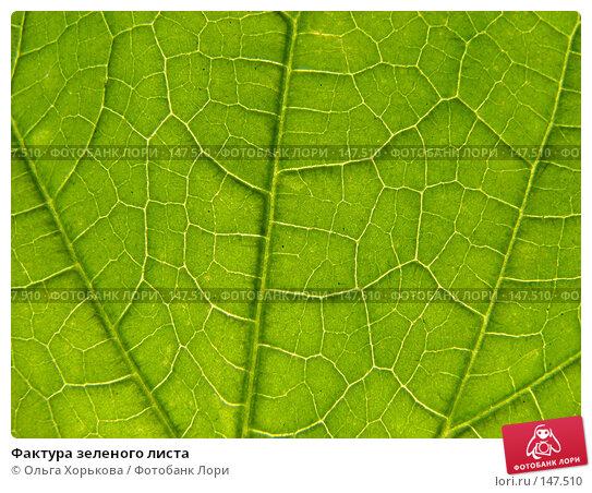 Фактура зеленого листа, фото № 147510, снято 13 августа 2007 г. (c) Ольга Хорькова / Фотобанк Лори