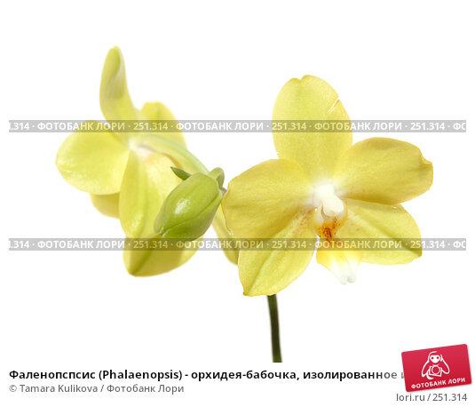 Фаленопспсис (Phalaenopsis) - орхидея-бабочка, изолированное изображение, фото № 251314, снято 14 апреля 2008 г. (c) Tamara Kulikova / Фотобанк Лори