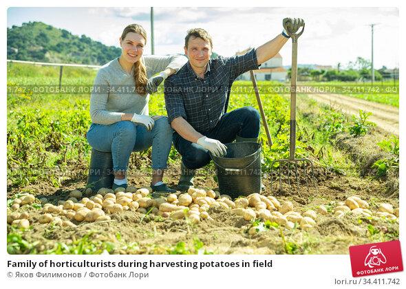 Family of horticulturists during harvesting potatoes in field. Стоковое фото, фотограф Яков Филимонов / Фотобанк Лори