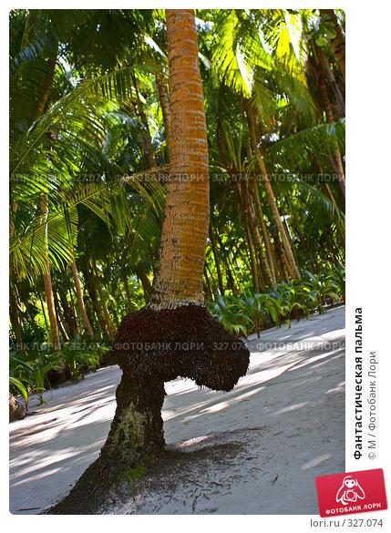Купить «Фантастическая пальма», фото № 327074, снято 20 апреля 2018 г. (c) М / Фотобанк Лори