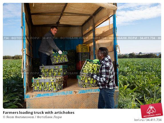 Farmers loading truck with artichokes. Стоковое фото, фотограф Яков Филимонов / Фотобанк Лори