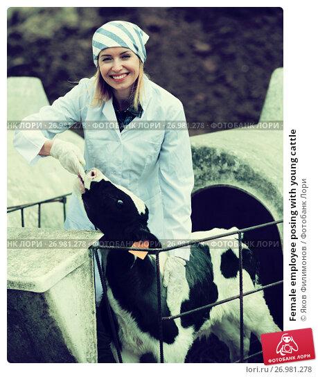 Female employee posing with young cattle, фото № 26981278, снято 19 октября 2017 г. (c) Яков Филимонов / Фотобанк Лори