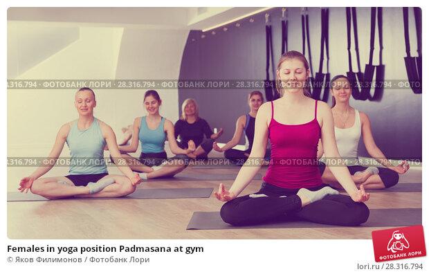 Купить «Females in yoga position Padmasana at gym», фото № 28316794, снято 29 января 2018 г. (c) Яков Филимонов / Фотобанк Лори