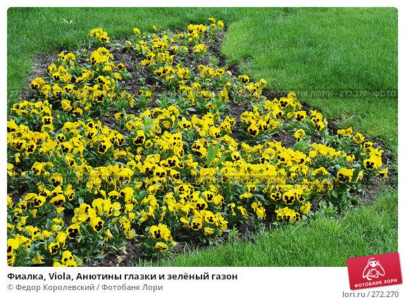 Фиалка, Viola, Анютины глазки и зелёный газон, фото № 272270, снято 31 марта 2007 г. (c) Федор Королевский / Фотобанк Лори
