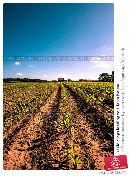 Field crops leading to a farm house. Стоковое фото, фотограф Zoonar.com/Kasper Nymann / age Fotostock / Фотобанк Лори