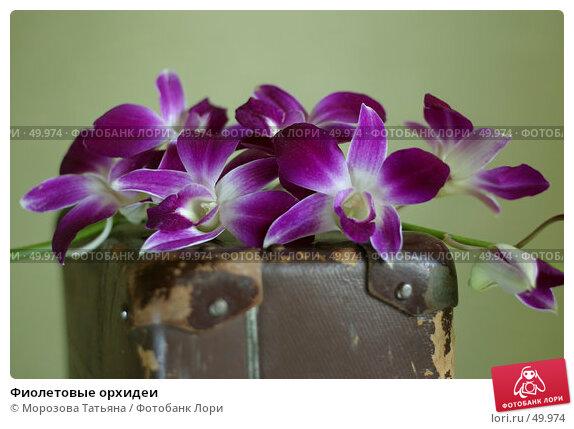 Купить «Фиолетовые орхидеи», фото № 49974, снято 27 сентября 2006 г. (c) Морозова Татьяна / Фотобанк Лори