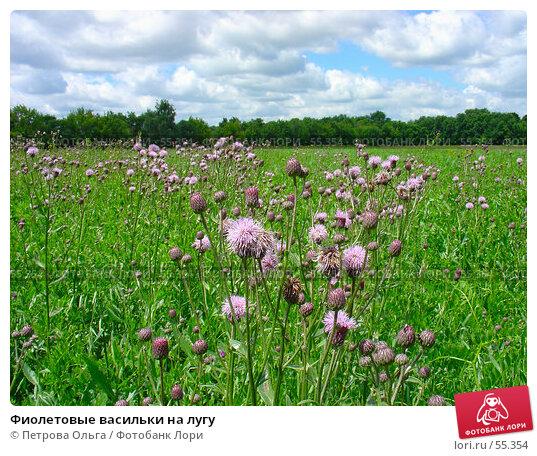 Фиолетовые васильки на лугу, фото № 55354, снято 1 июля 2005 г. (c) Петрова Ольга / Фотобанк Лори