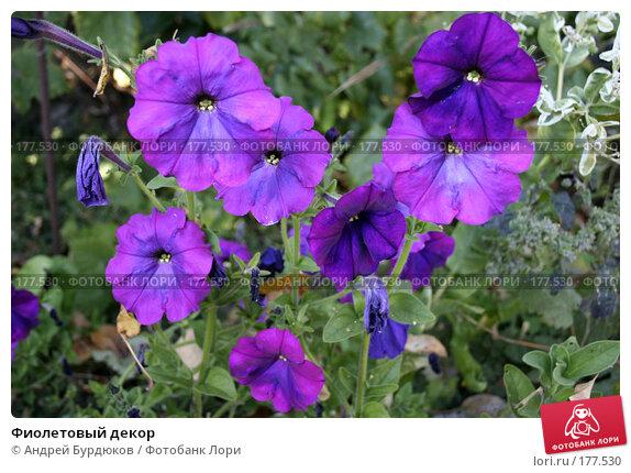 Фиолетовый декор, фото № 177530, снято 6 октября 2007 г. (c) Андрей Бурдюков / Фотобанк Лори