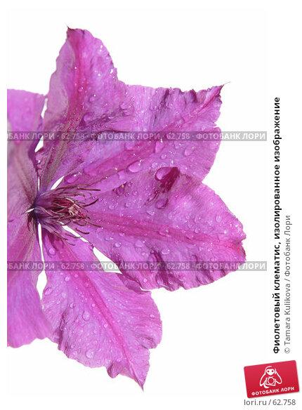Фиолетовый клематис, изолированное изображение, фото № 62758, снято 17 июля 2007 г. (c) Tamara Kulikova / Фотобанк Лори