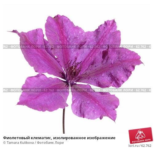 Купить «Фиолетовый клематис, изолированное изображение», фото № 62762, снято 17 июля 2007 г. (c) Tamara Kulikova / Фотобанк Лори
