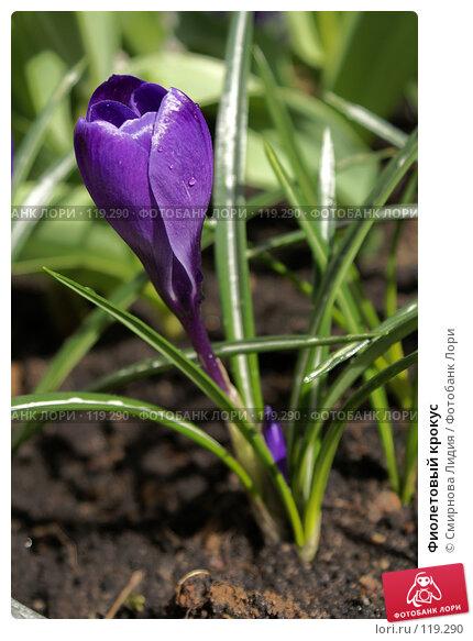 Купить «Фиолетовый крокус», фото № 119290, снято 12 апреля 2007 г. (c) Смирнова Лидия / Фотобанк Лори