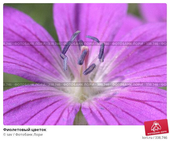 Фиолетовый цветок, фото № 338746, снято 19 августа 2006 г. (c) sav / Фотобанк Лори