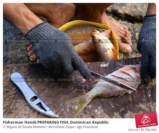 Fisherman Hands PREPARING FISH, Dominican Republic. Стоковое фото, фотограф Miguel de Zavala Matteini / age Fotostock / Фотобанк Лори