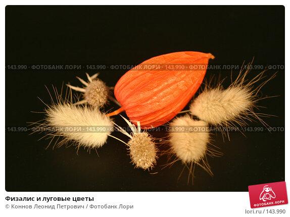 Купить «Физалис и луговые цветы», фото № 143990, снято 10 декабря 2007 г. (c) Коннов Леонид Петрович / Фотобанк Лори