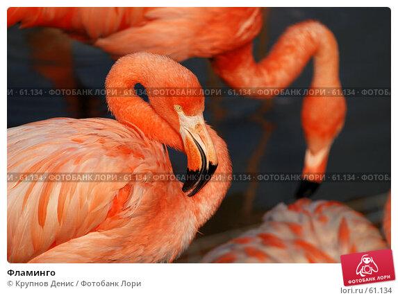 Фламинго, фото № 61134, снято 11 мая 2007 г. (c) Крупнов Денис / Фотобанк Лори