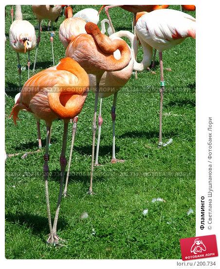 Фламинго, фото № 200734, снято 9 мая 2006 г. (c) Светлана Шушпанова / Фотобанк Лори