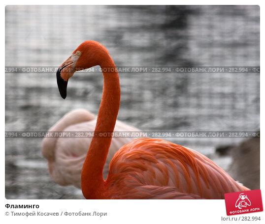 Фламинго, фото № 282994, снято 12 апреля 2008 г. (c) Тимофей Косачев / Фотобанк Лори