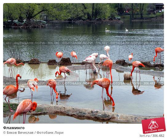 Купить «Фламинго», фото № 306482, снято 16 апреля 2008 г. (c) Бяков Вячеслав / Фотобанк Лори
