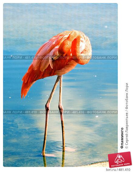 Фламинго, фото № 481410, снято 26 сентября 2008 г. (c) Сергей Лаврентьев / Фотобанк Лори
