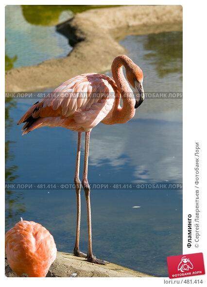 Фламинго, фото № 481414, снято 26 сентября 2008 г. (c) Сергей Лаврентьев / Фотобанк Лори