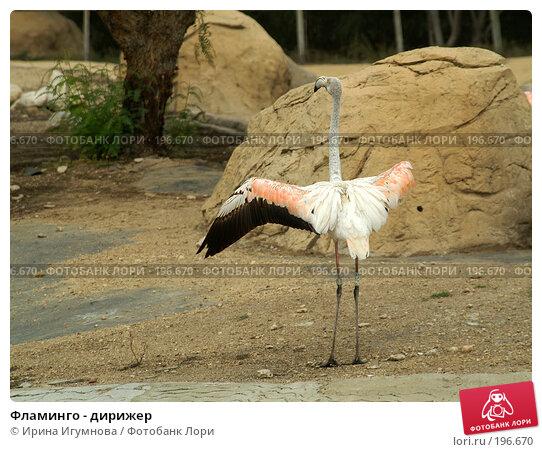 Фламинго - дирижер, фото № 196670, снято 9 июня 2006 г. (c) Ирина Игумнова / Фотобанк Лори