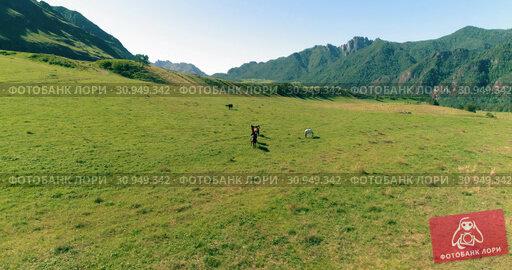 Купить «Flight over wild horses herd on meadow. Spring mountains wild nature. Freedom ecology concept.», видеоролик № 30949342, снято 12 ноября 2017 г. (c) Александр Маркин / Фотобанк Лори
