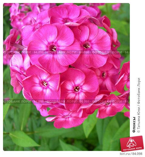 Флоксы, эксклюзивное фото № 84098, снято 18 июля 2007 г. (c) Татьяна Юни / Фотобанк Лори