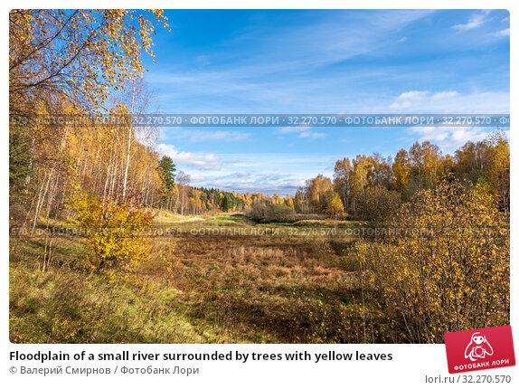 Купить «Floodplain of a small river surrounded by trees with yellow leaves», фото № 32270570, снято 5 октября 2019 г. (c) Валерий Смирнов / Фотобанк Лори