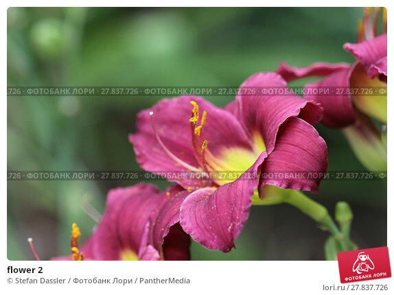 Купить «flower 2», фото № 27837726, снято 22 октября 2018 г. (c) PantherMedia / Фотобанк Лори