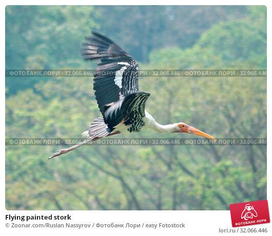 Flying painted stork. Стоковое фото, фотограф Zoonar.com/Ruslan Nassyrov / easy Fotostock / Фотобанк Лори