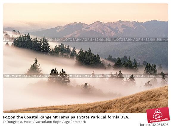 Fog on the Coastal Range Mt Tamalpais State Park California USA. Стоковое фото, фотограф Douglas A. Holck / age Fotostock / Фотобанк Лори