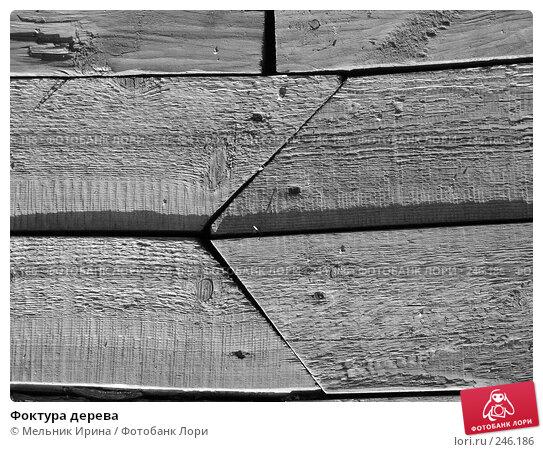 Купить «Фоктура дерева», фото № 246186, снято 11 августа 2006 г. (c) Мельник Ирина / Фотобанк Лори