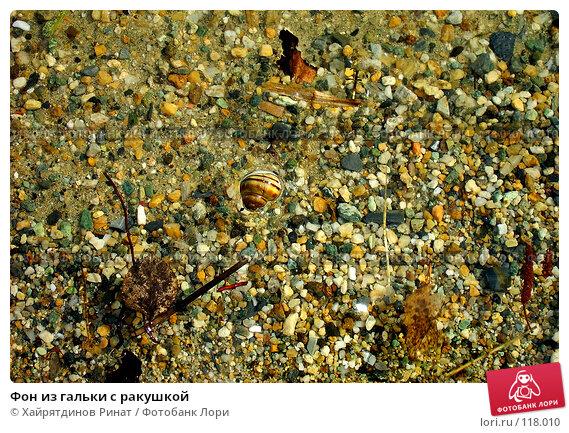 Фон из гальки с ракушкой, фото № 118010, снято 11 мая 2007 г. (c) Хайрятдинов Ринат / Фотобанк Лори