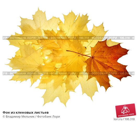 Фон из кленовых листьев, фото № 100318, снято 29 сентября 2007 г. (c) Владимир Мельник / Фотобанк Лори