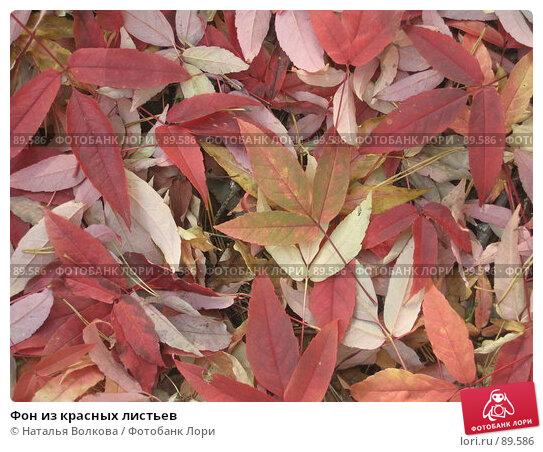 Фон из красных листьев, фото № 89586, снято 26 сентября 2007 г. (c) Наталья Волкова / Фотобанк Лори