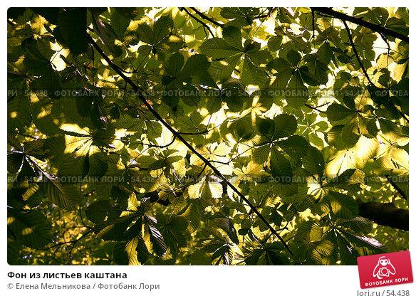 Фон из листьев каштана, фото № 54438, снято 20 августа 2017 г. (c) Елена Мельникова / Фотобанк Лори