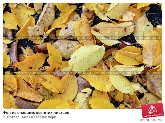 Фон из опавших осенних листьев, фото № 102746, снято 23 июля 2017 г. (c) Круглов Олег / Фотобанк Лори