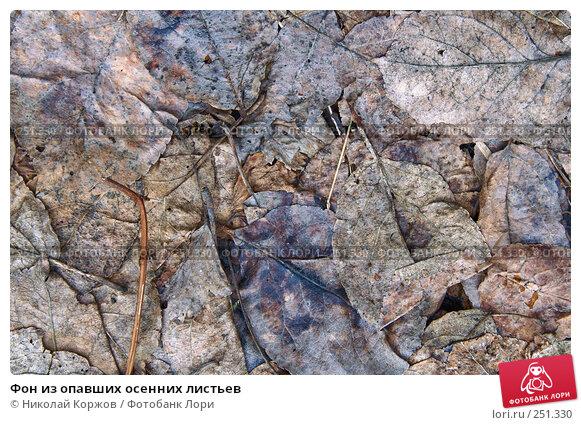 Купить «Фон из опавших осенних листьев», фото № 251330, снято 15 марта 2008 г. (c) Николай Коржов / Фотобанк Лори