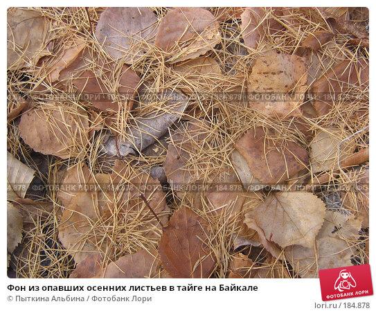 Фон из опавших осенних листьев в тайге на Байкале, фото № 184878, снято 26 октября 2007 г. (c) Пыткина Альбина / Фотобанк Лори