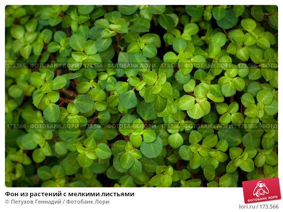 Фон из растений с мелкими листьями, фото № 173566, снято 30 июня 2007 г. (c) Петухов Геннадий / Фотобанк Лори