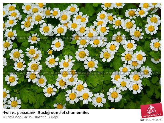Фон из ромашек   Background of chamomiles, фото № 93874, снято 17 сентября 2007 г. (c) Бутинова Елена / Фотобанк Лори