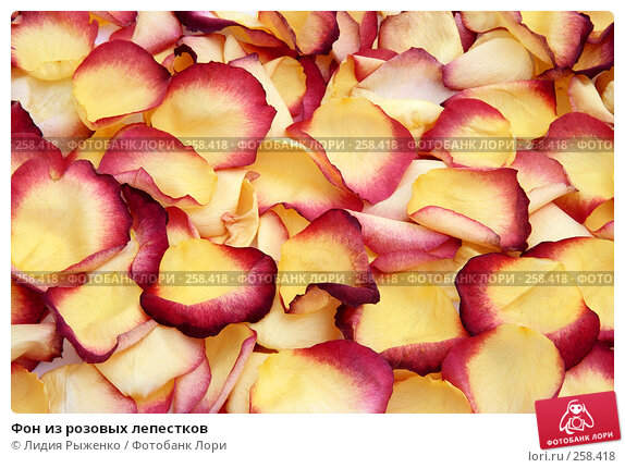 Фон из розовых лепестков, фото № 258418, снято 12 апреля 2008 г. (c) Лидия Рыженко / Фотобанк Лори