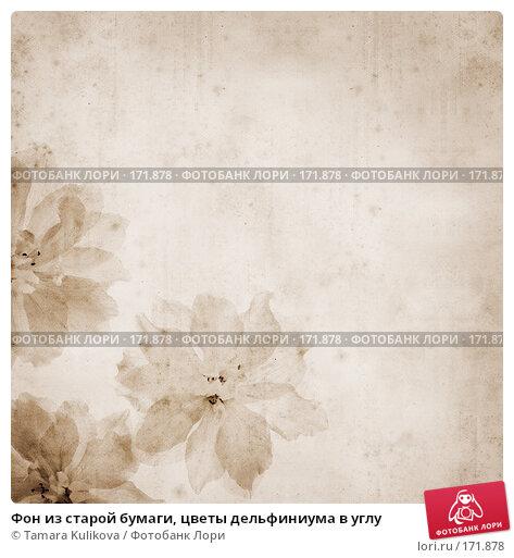 Фон из старой бумаги, цветы дельфиниума в углу, иллюстрация № 171878 (c) Tamara Kulikova / Фотобанк Лори